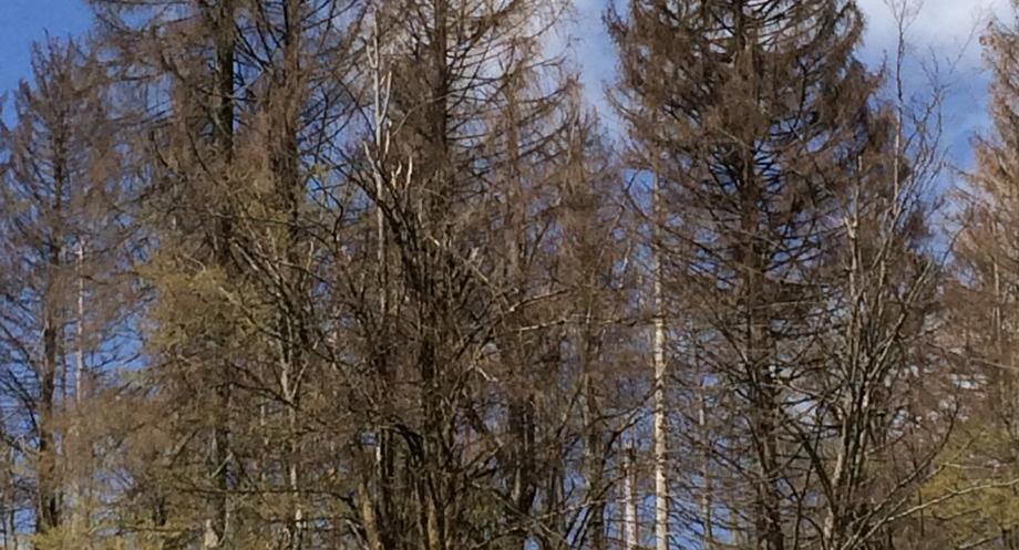 slatka tema za upoznavanje šuma