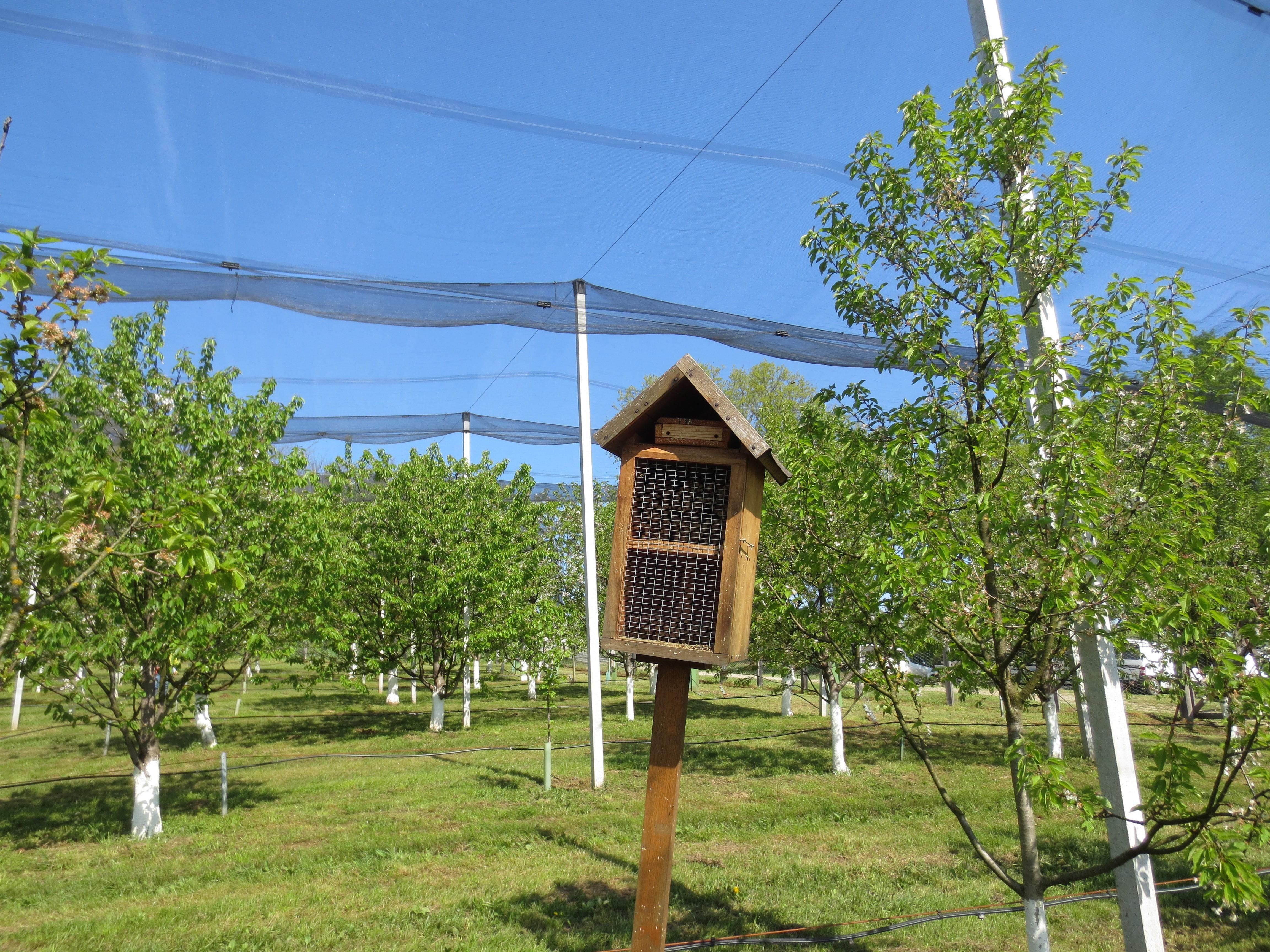 mjesto za upoznavanje medonosnih pčela