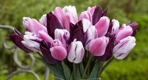 Savjeti za upoznavanje cvijeća x faktor datiranje bristola