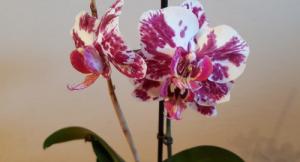 Međunarodna izložba cvijeća